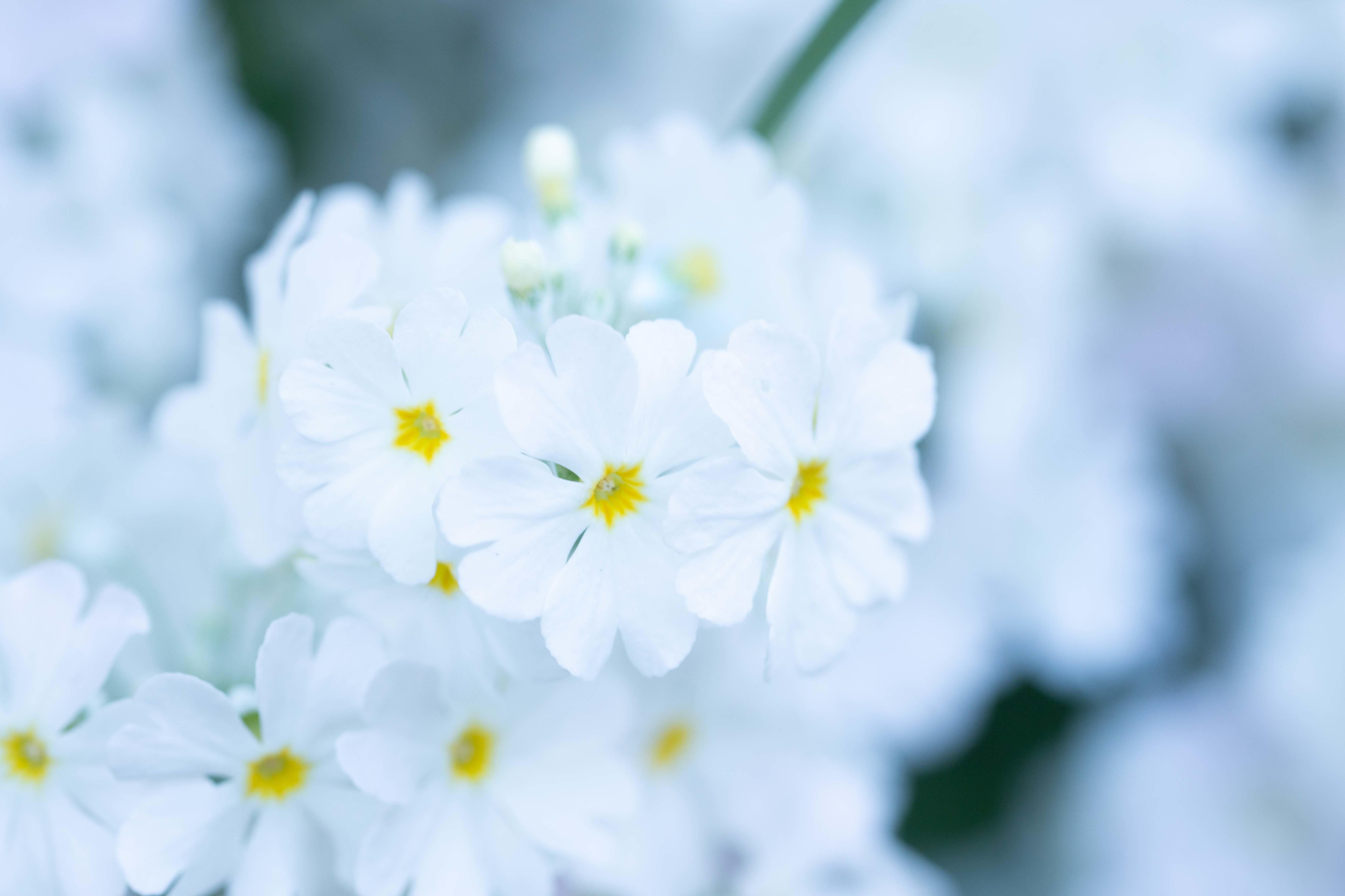 春景色_e0305388_15011675.jpg
