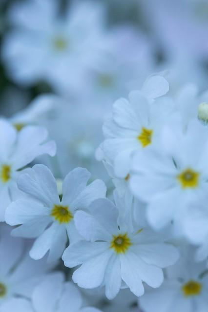 春景色_e0305388_15023101.jpg