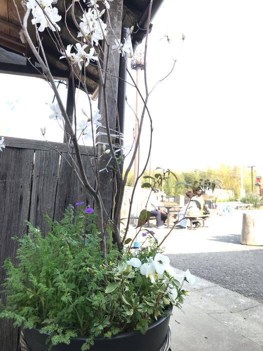 2019年 春のお手入れと今年の桜_a0233896_21494080.jpg