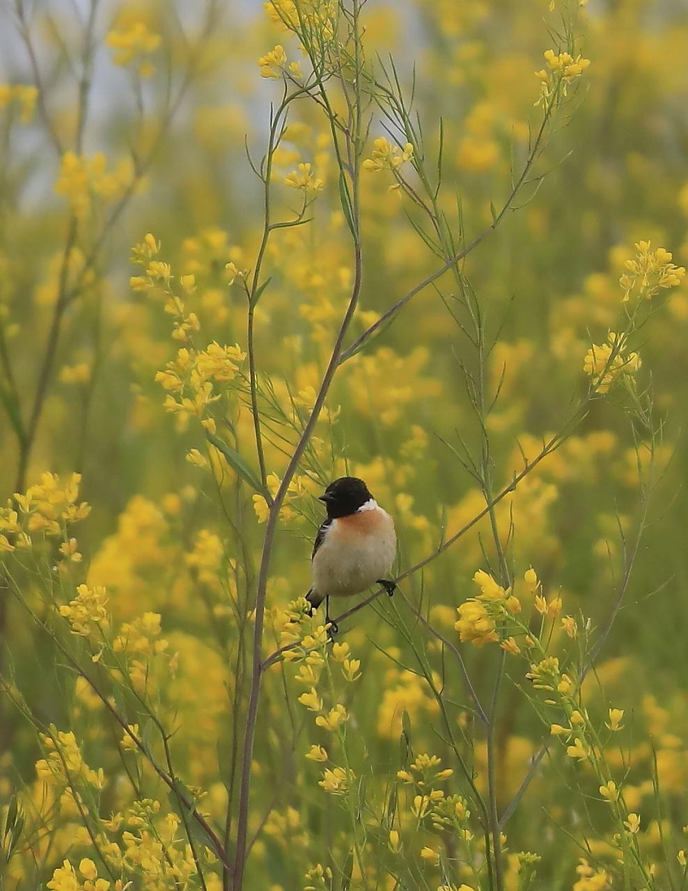 夏鳥が入ってきた_f0296999_17362117.jpg