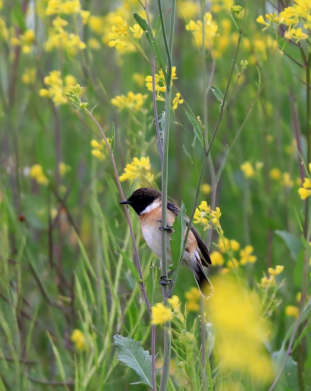 夏鳥が入ってきた_f0296999_17362970.jpg
