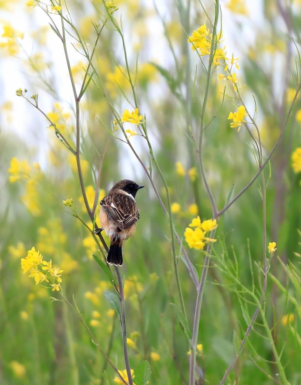 夏鳥が入ってきた_f0296999_17363517.jpg