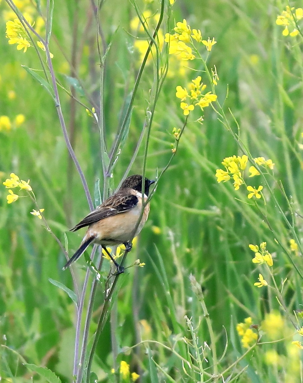 夏鳥が入ってきた_f0296999_17364178.jpg