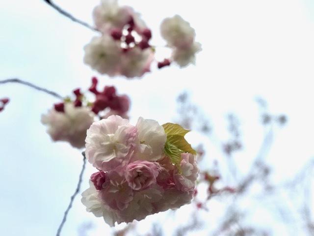 大阪日日新聞記者になる!_a0050302_14130185.jpg