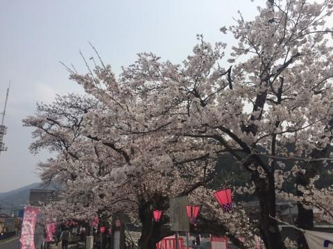 智頭桜まつり・用瀬流し雛まつり_e0115904_04493259.jpg