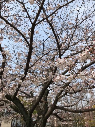 花見と春休み_d0191206_23065238.jpg