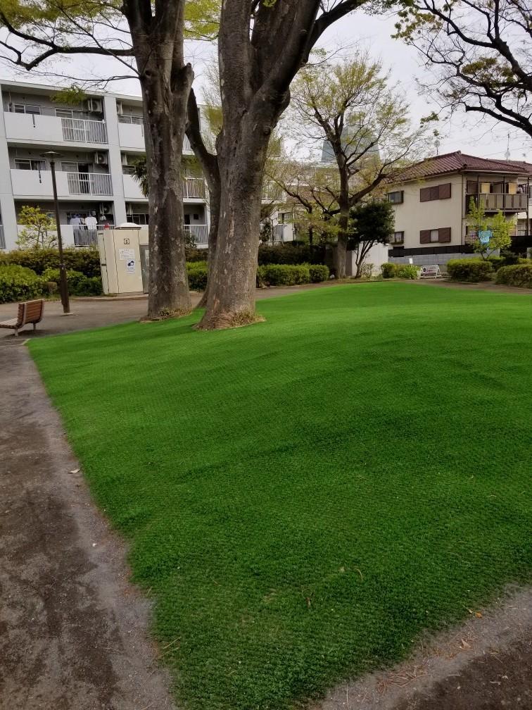 御衣黄桜・桜新町公園の芝生…2019/4/14_f0231709_10300645.jpg