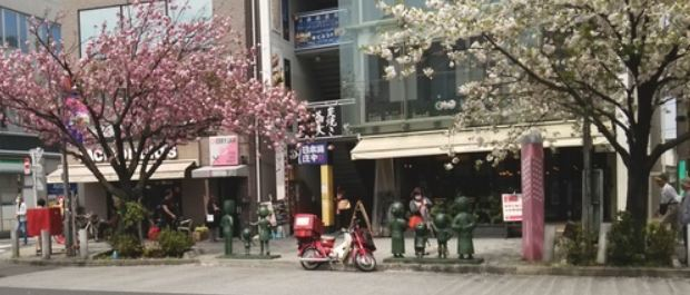 御衣黄桜・桜新町公園の芝生…2019/4/14_f0231709_10370543.jpg