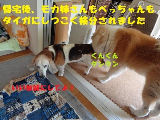 f0121712_00315683.jpg
