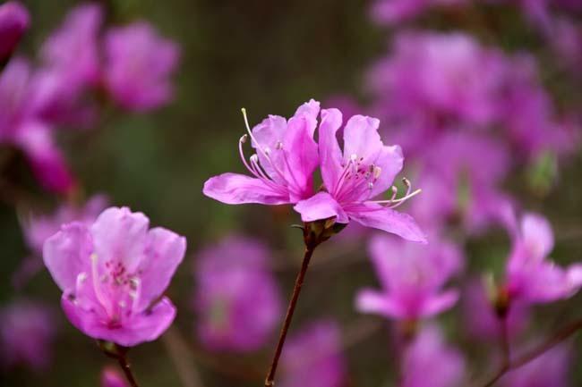 桜からつつじへ_e0048413_17501993.jpg