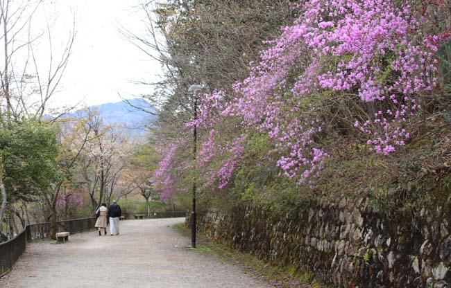 桜からつつじへ_e0048413_17502795.jpg