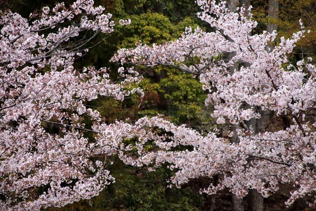 桜からつつじへ_e0048413_17503619.jpg