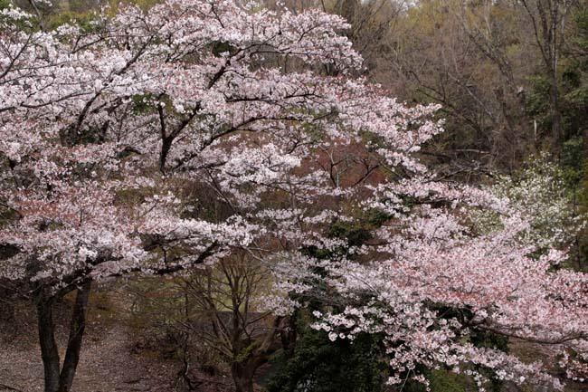 桜からつつじへ_e0048413_17503880.jpg