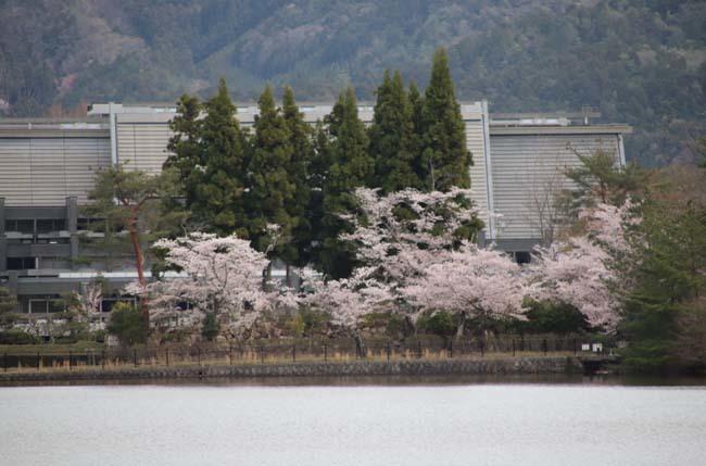 桜からつつじへ_e0048413_17504539.jpg