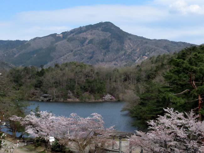 桜からつつじへ_e0048413_17504715.jpg