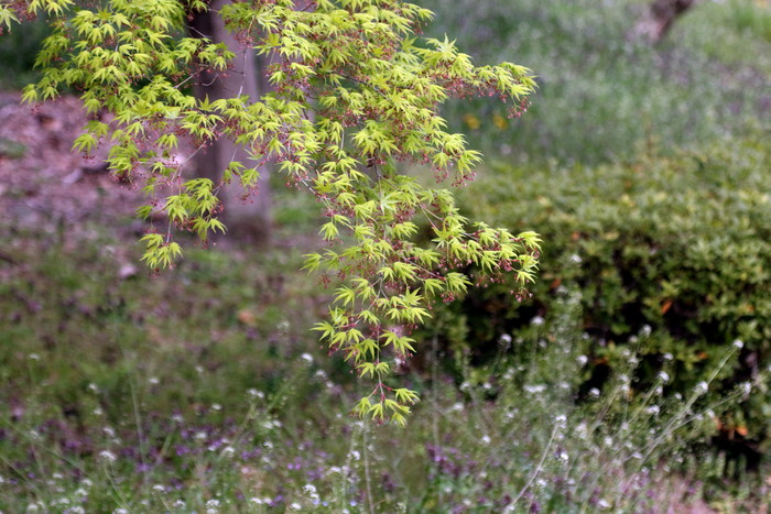 里山のサシバに逢いに その2(桜を背景に)_f0239515_21464252.jpg