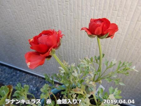 e0033229_17295072.jpg