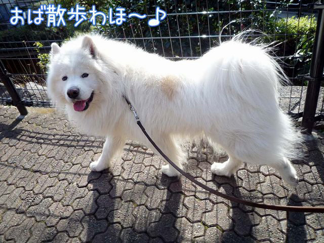 散歩屋日誌【1】_c0062832_18593949.jpg
