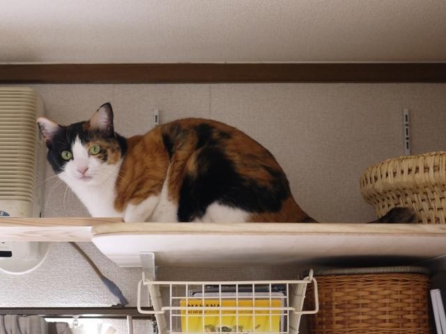 猫のお留守番 みーたんちゃん編。_a0143140_20575761.jpg