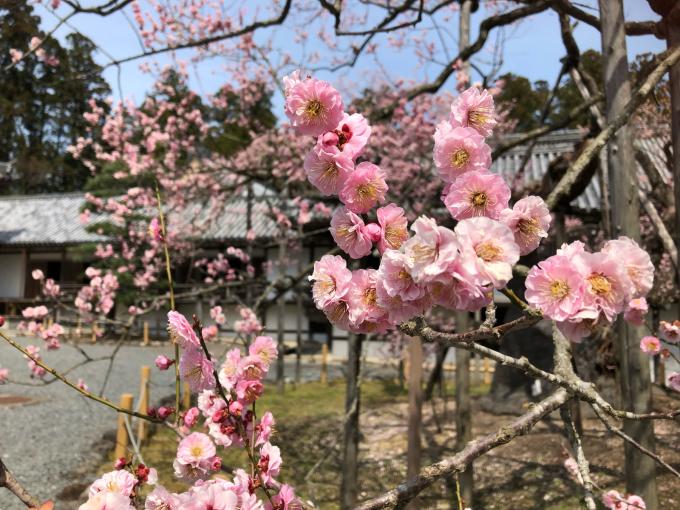 松島にお花見🌸_f0216749_16212980.jpg