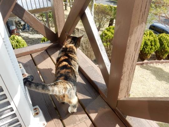 '19,4,14(日)猫のこころちゃんは見た!_f0060461_09575672.jpg