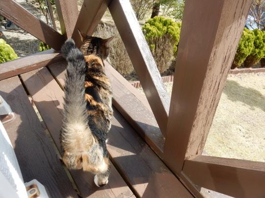 '19,4,14(日)猫のこころちゃんは見た!_f0060461_09585376.jpg