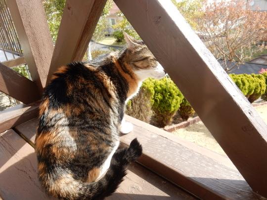 '19,4,14(日)猫のこころちゃんは見た!_f0060461_10032281.jpg