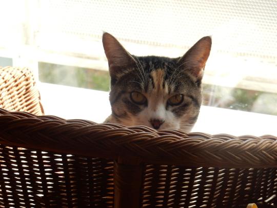 '19,4,14(日)猫のこころちゃんは見た!_f0060461_10042701.jpg