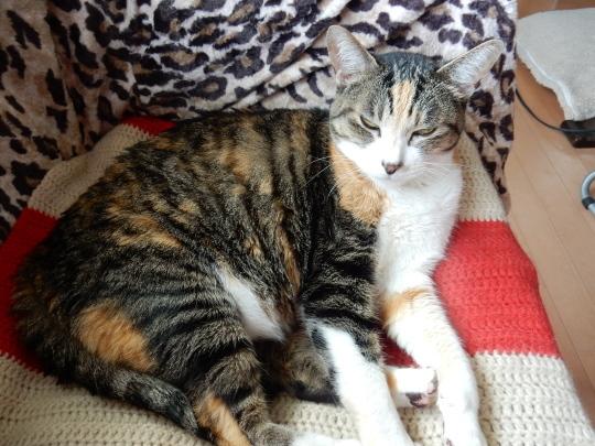 '19,4,14(日)猫のこころちゃんは見た!_f0060461_10060780.jpg