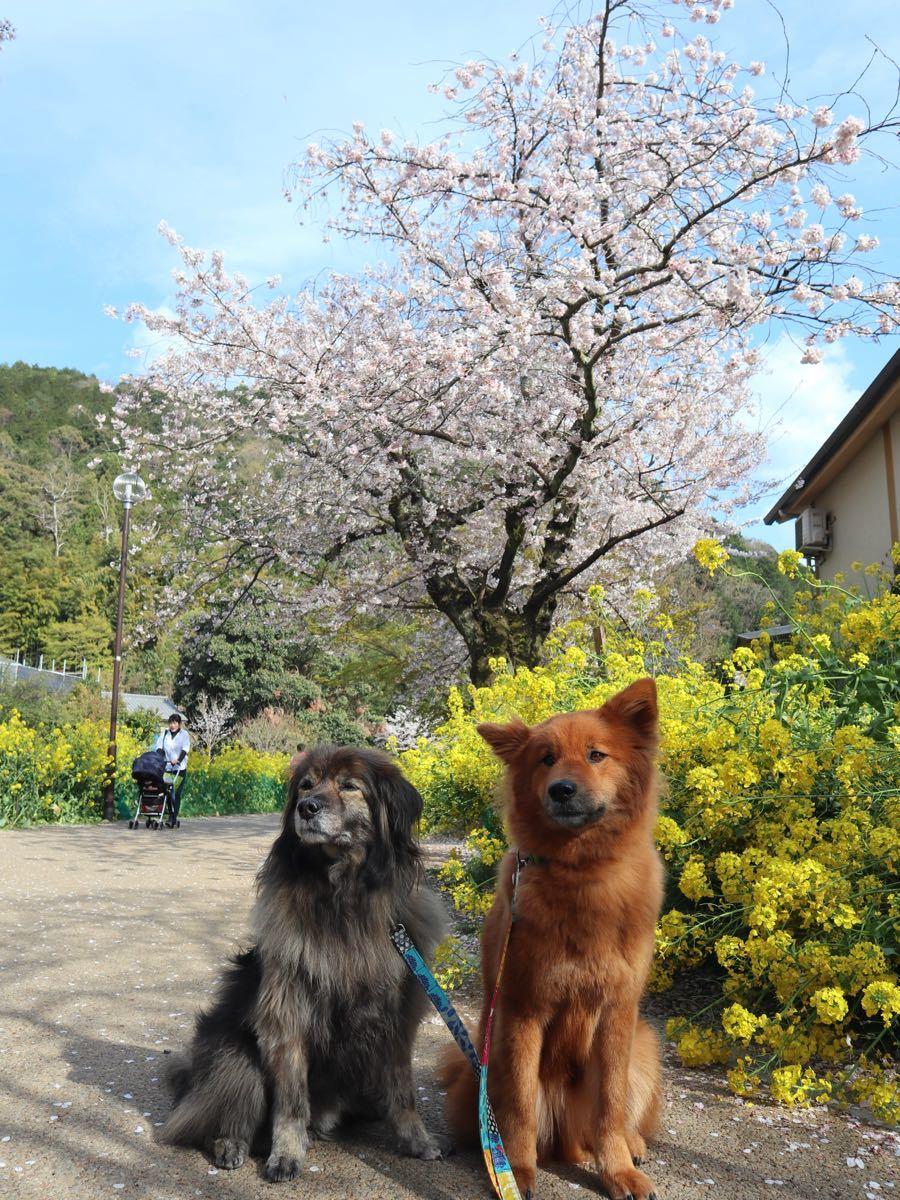 2019年・桜 <東山自然緑地>_a0119263_18024706.jpg