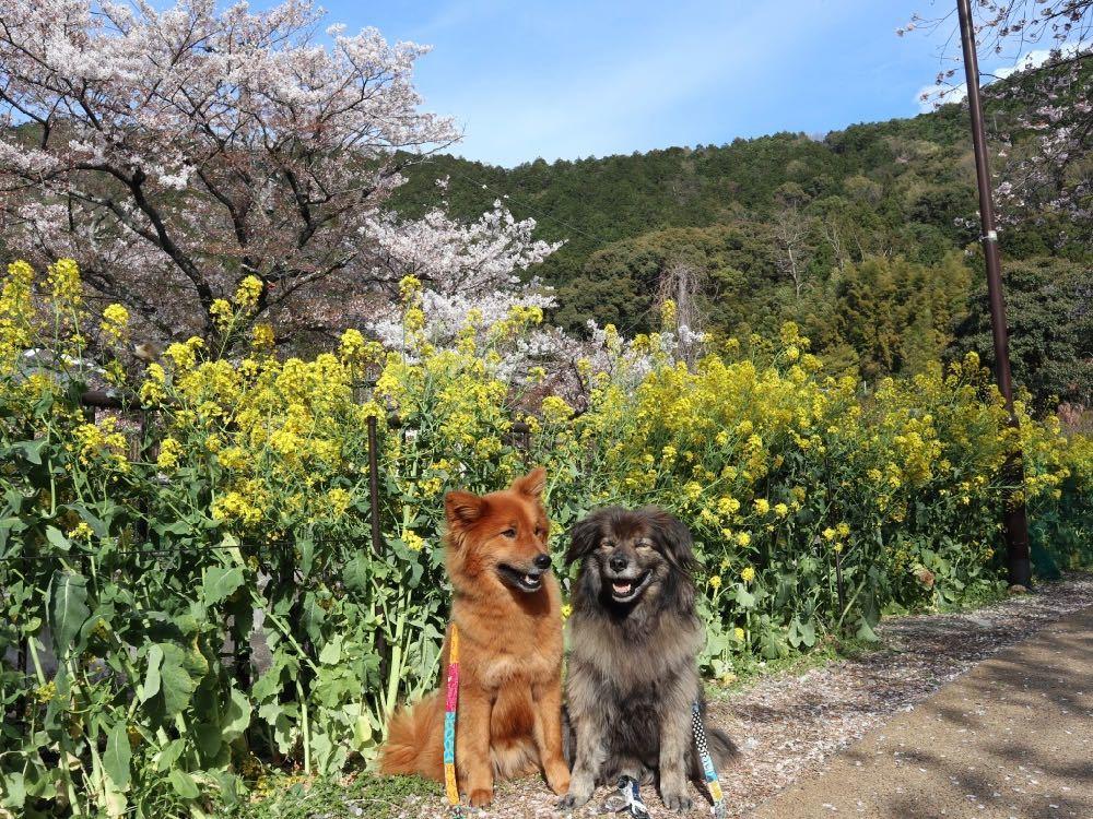 2019年・桜 <東山自然緑地>_a0119263_18024825.jpg