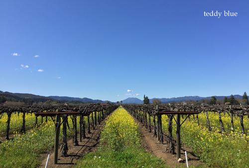 Spring Break in Napa Valley, CA スプリングブレイク in ナパバレー_e0253364_11112022.jpg