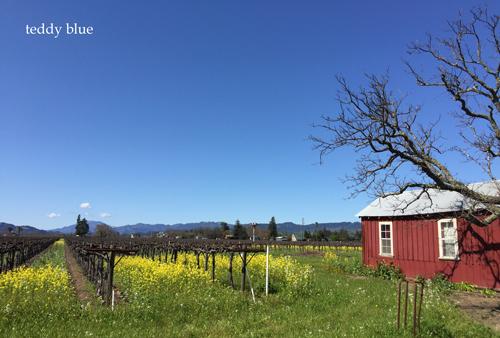 Spring Break in Napa Valley, CA スプリングブレイク in ナパバレー_e0253364_11112362.jpg