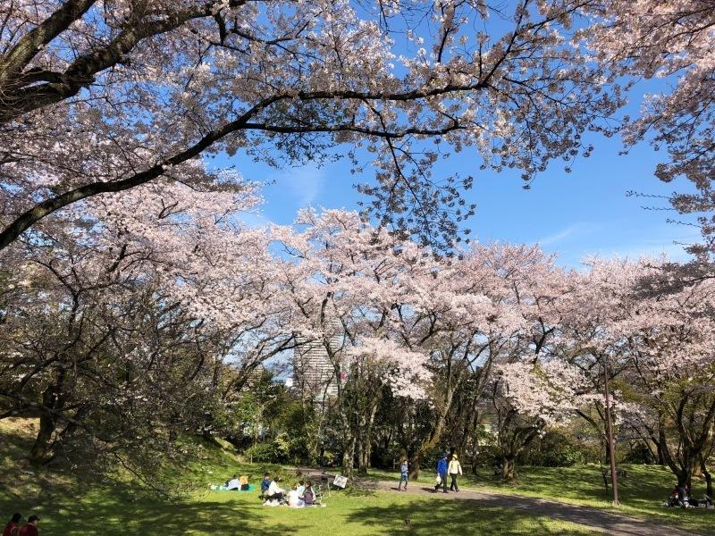 4月13日 琵琶湖畔でのんびり過ごす_a0023466_08464245.jpg