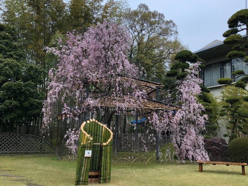 4月14日 お茶会に参加_a0023466_20320524.jpg