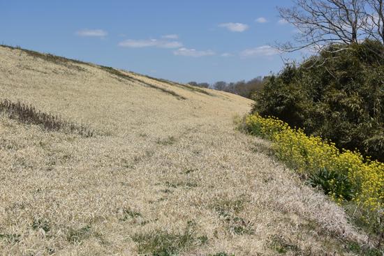 枯野に飛ぶ春の蝶_e0167571_5592440.jpg