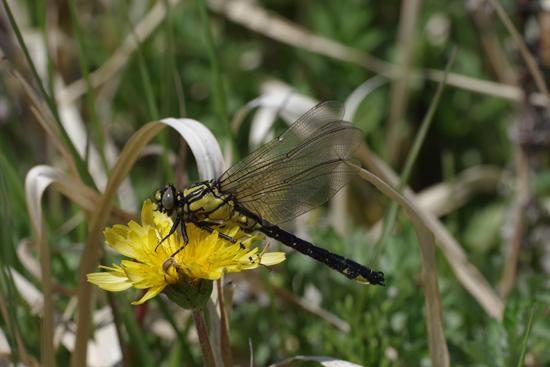 枯野に飛ぶ春の蝶_e0167571_60260.jpg