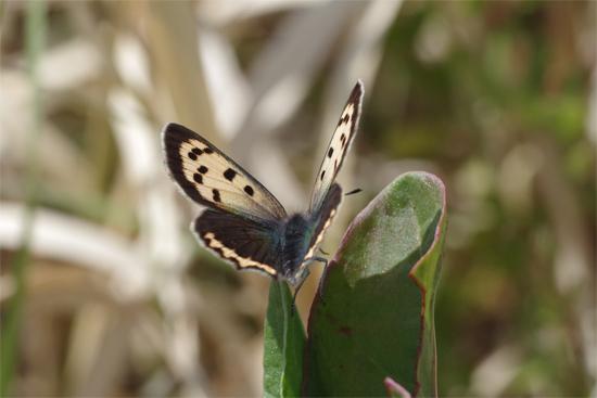 枯野に飛ぶ春の蝶_e0167571_603898.jpg