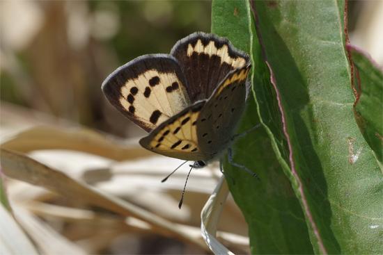 枯野に飛ぶ春の蝶_e0167571_605542.jpg