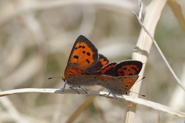 枯野に飛ぶ春の蝶_e0167571_623421.jpg