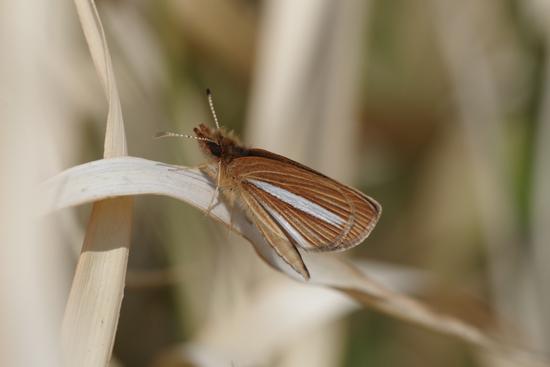 枯野に飛ぶ春の蝶_e0167571_635345.jpg