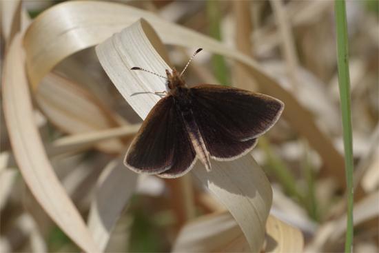 枯野に飛ぶ春の蝶_e0167571_641374.jpg