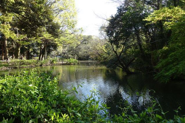 新緑の公園_e0232277_15221165.jpg