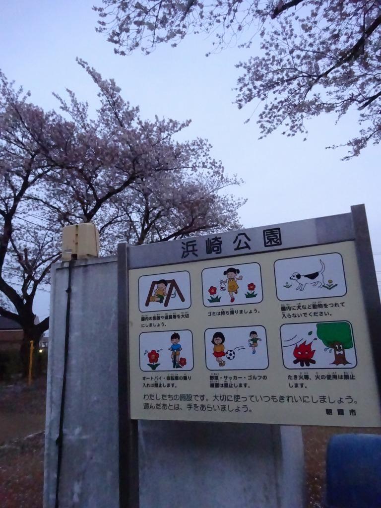昨日もひとり花見、朝霞浜崎公園は寒かった_d0061678_10362789.jpg