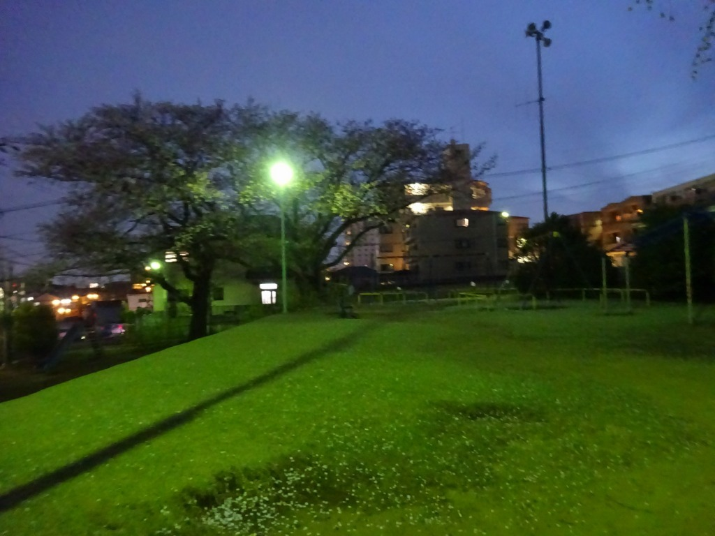 昨日もひとり花見、朝霞浜崎公園は寒かった_d0061678_10380870.jpg