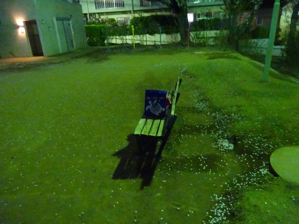 昨日もひとり花見、朝霞浜崎公園は寒かった_d0061678_10405718.jpg