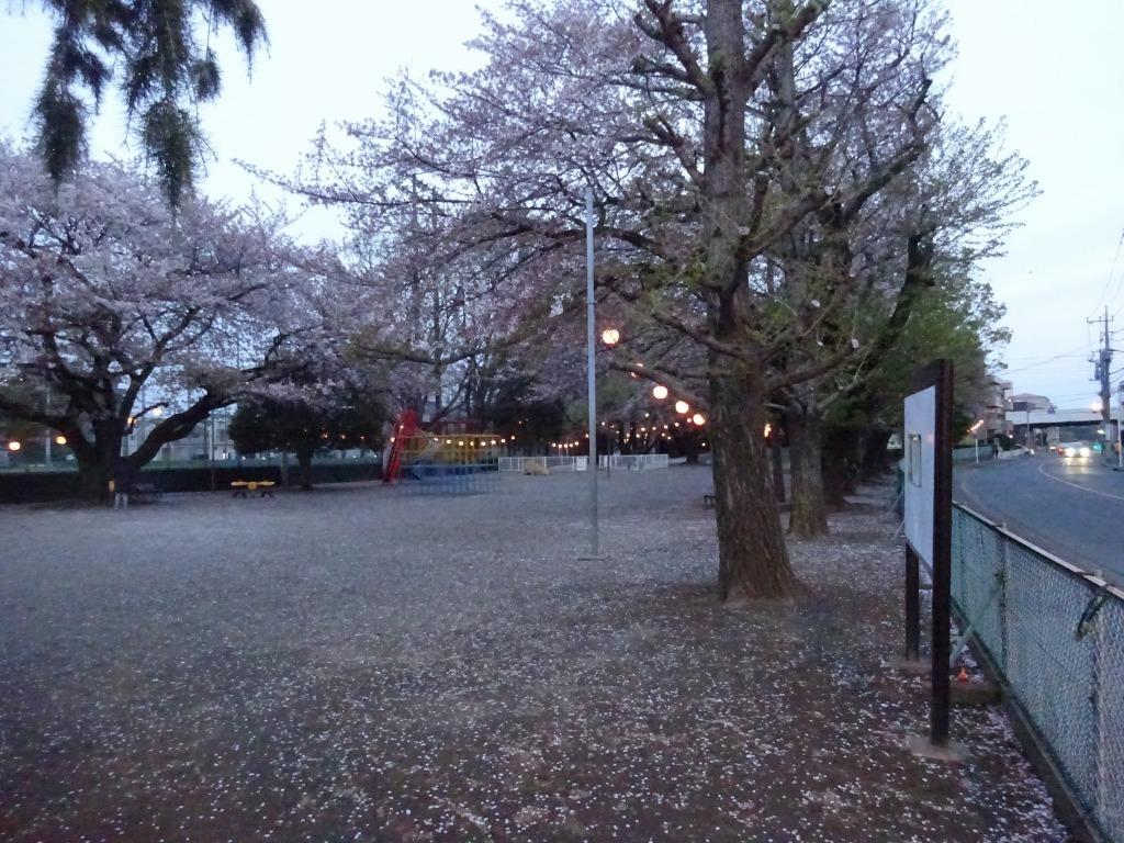 昨日もひとり花見、朝霞浜崎公園は寒かった_d0061678_10462389.jpg
