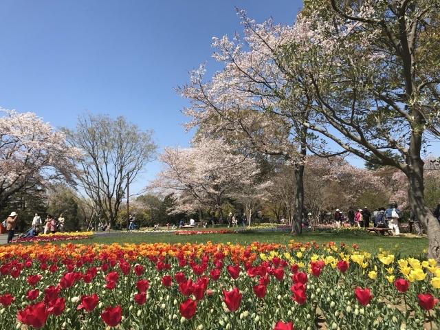 昭和記念公園のチューリップ_a0180279_10153856.jpg