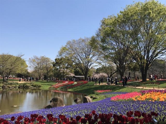 昭和記念公園のチューリップ_a0180279_10175403.jpg