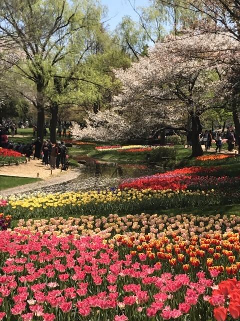 昭和記念公園のチューリップ_a0180279_10193762.jpg